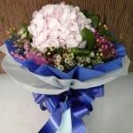 sweethydrangea